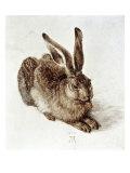 The Young Hare Giclée par Albrecht Dürer