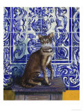 Cat of Portugal (Chat Du Portugal)