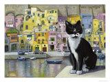 Cat in Corricella  Italy