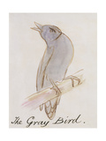 "The Gray Bird  from ""Sixteen Drawings of Comic Birds"""