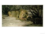 Lion Reclining in a Landscape