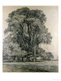 Elm Trees in Old Hall Park  East Bergholt  1817