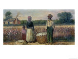Cotton Pickers in the American South