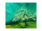 Apple tree in spring  landscape