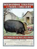 International Hog Swine Feed