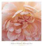 Heavenly Rose