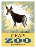 Okapi Copenhagen Zoo