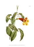 Fiery Florals III
