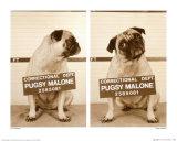 Pugsy Malone