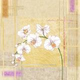 Orchid Memories II