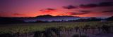 Vineyard at Sunset, Napa Valley, California, USA Papier Photo par Panoramic Images