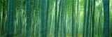 Forêt de bambous à Sagano (Kyoto), Japon Papier Photo par Panoramic Images