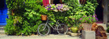 Bicycle in Front of Wall Covered with Plants and Flowers  Rochefort En Terre  France