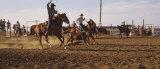 Cowboys Roping a Calf  North Dakota  USA