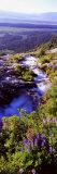 High Angle View of a Waterfall  Ribbon Falls  Yosemite National Park  California  USA