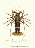 Antique Lobster IV