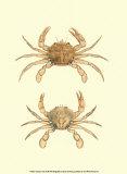 Antique Crab III