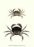 Antique Crab I