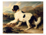 Newfoundland Dog Called Lion  1824