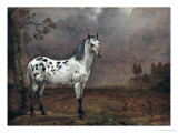 The Piebald Horse  1653