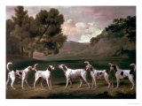 Foxhounds in a Landscape  1762