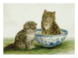Kitten in a Blue China Bowl
