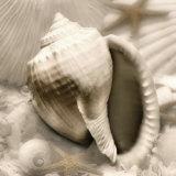 Iridescent Seashell III