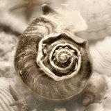 Iridescent Seashell IV