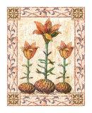 Provincial Lilium