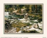 Buck in Midstream