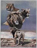 Lion Montage