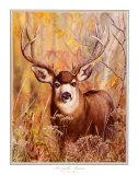 Buck in Forest