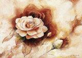 Rose Shadow II