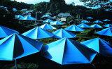 Umbrellas No 12  1991 - Signed