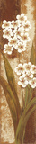 Tropical Blossom II