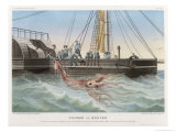 """Calmar de Bouyer Giant Squid Caught by the French Vessel """"Alecto"""" off Tenerife Canary Islands Giclée par E. Rodolphe"""