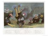 An Assortment of Sea Anemones