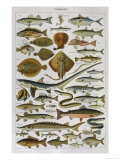 An Assortment of Fish