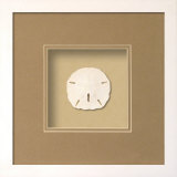 *Exclusive* Sanddollar Shadowbox - Sand