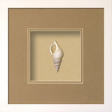 *Exclusive* Baby Tibia Shell Shadowbox - Sand