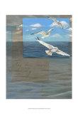 Three White Gulls III