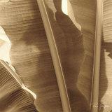 Banana Leaves I Reproduction d'art par Rene Griffith
