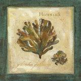 Hornwrack