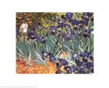 Iris, Saint-Rémy, vers 1889 Reproduction d'art par Vincent Van Gogh