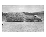 American Hay Farmer