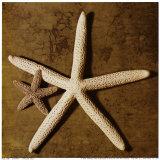 Étoiles de mer Reproduction d'art par Caroline Kelly