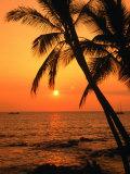 A Couple in Silhouette  Enjoying a Romantic Sunset Beneath the Palm Trees in Kailua-Kona  Hawaii
