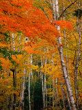 Autumn Foliage  USA