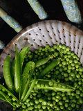Fresh Green Peas in Bowl  Melbourne  Victoria  Australia