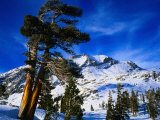 Snow Covered Mountain in Sierra Nevada  California  USA